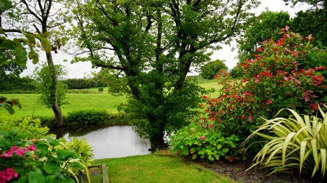 Why You Should Choose Sustainable Landscapes and Native Plants